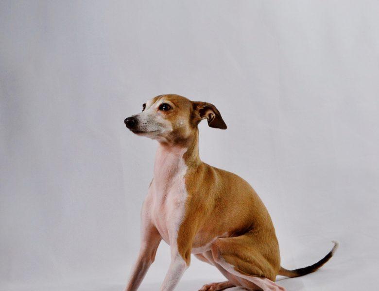 10 häufig gestellte Fragen zum Aufräumen von Hundekot