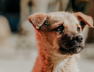 Woran erkenne ich Lyme bei meinem Hund?