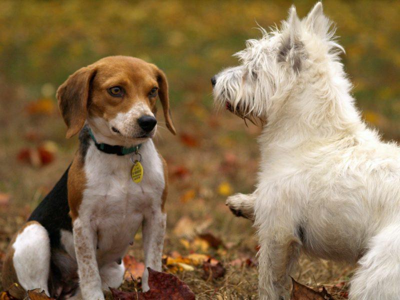 Gehst du mit deinem Hund ins Ausland? Vergiss die Impfung nicht!
